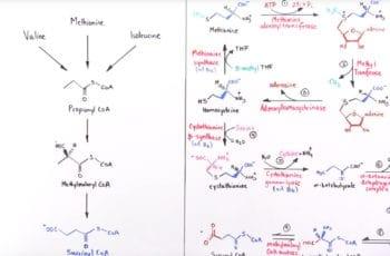 S-adenosilmetionina